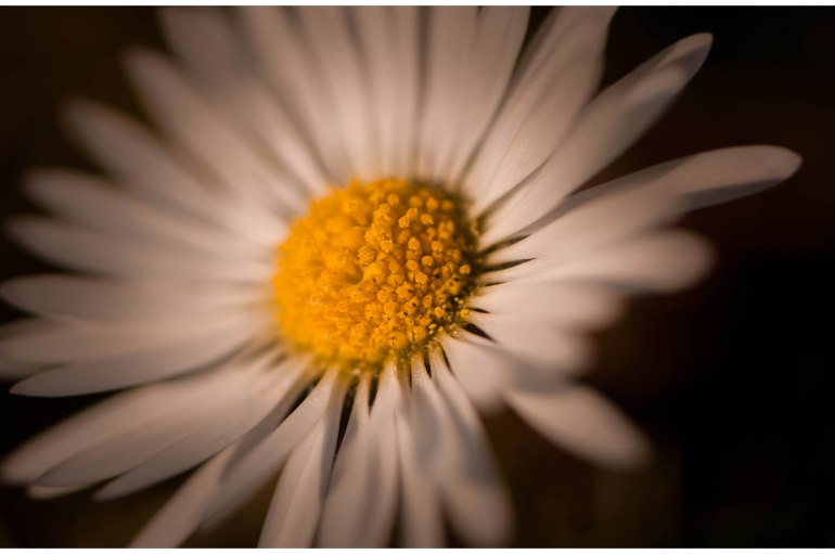 Lady-Spring